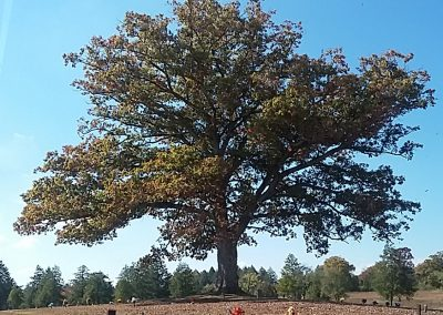 Adair Oak of Fountain City #29