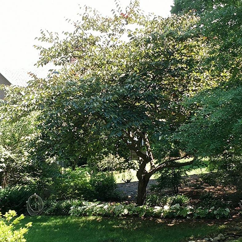 Anonymous Tree Sanctuary
