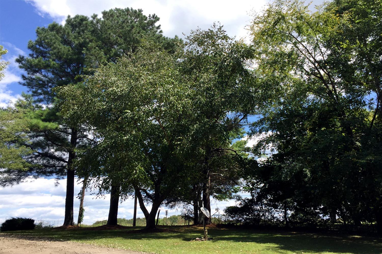 Anonymous White House Tree Sanctuary