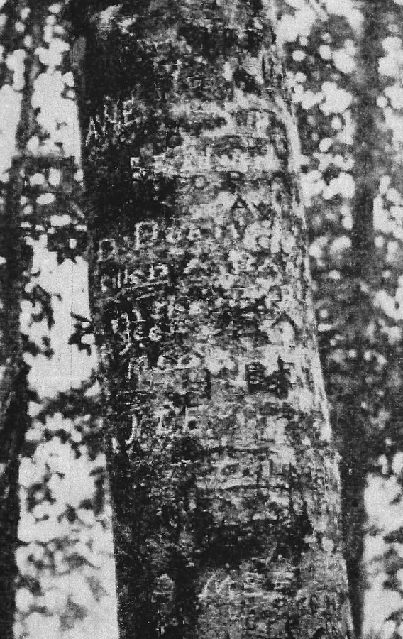 Daniel Boone Beech Heritage