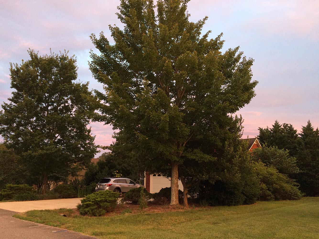 Douglas Airhart Tree Sanctuary
