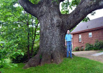 John Shanks White Oak of Jonesborough #25