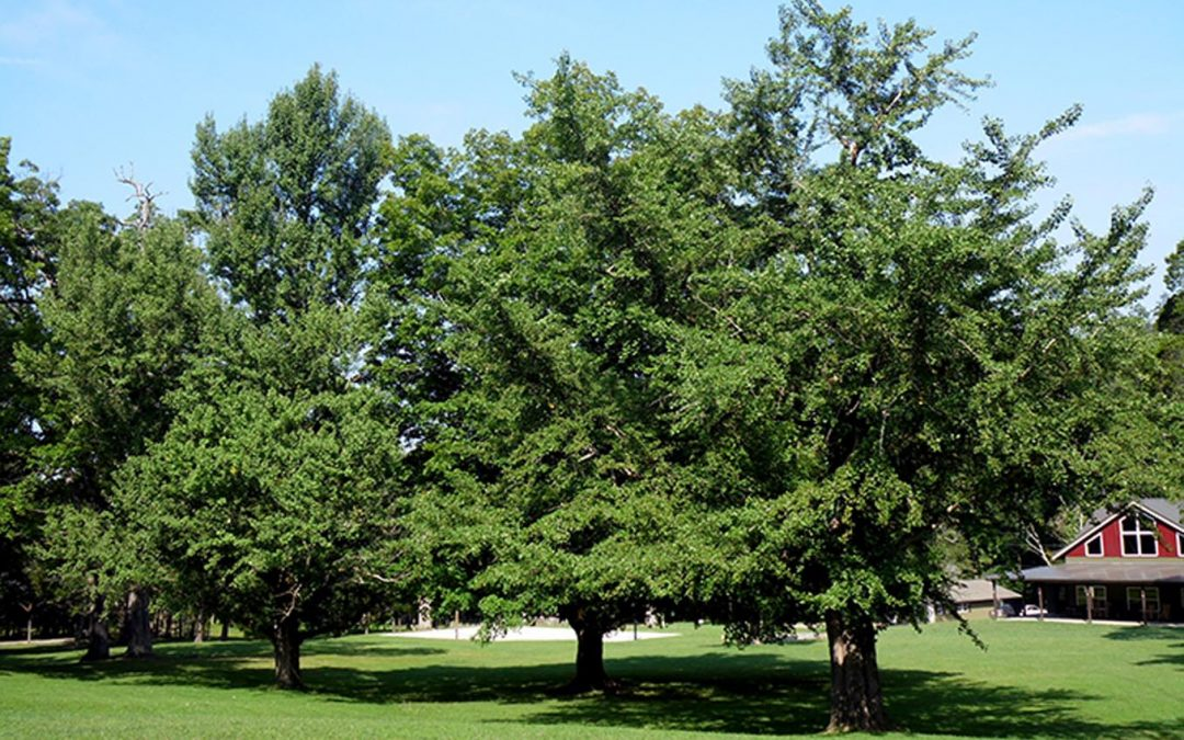 Montvale Springs Tree Grove #18