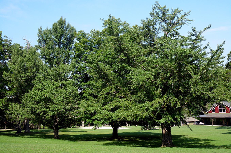 Montvale Springs Tree Grove