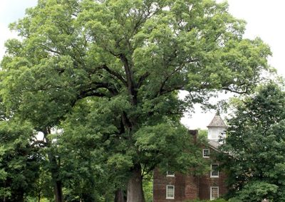 Old Oak of Tusculum College #19