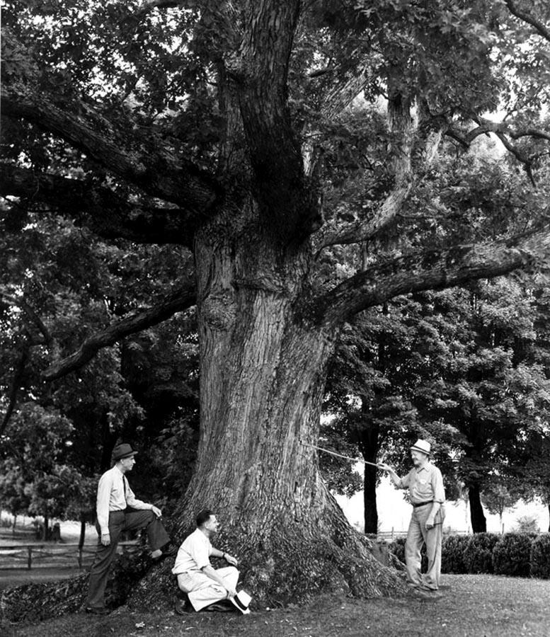 Pemberton Oak