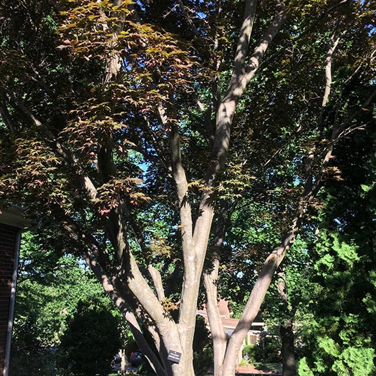 Roger and Thorunn McCoy Tree Sanctuary
