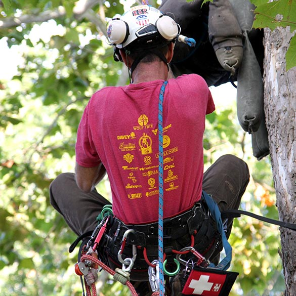Tennessee Tree Climbing Competition