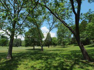 Norris Commons Arboretum