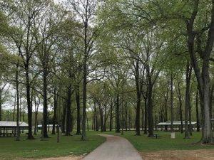 Milan Park Arboretum