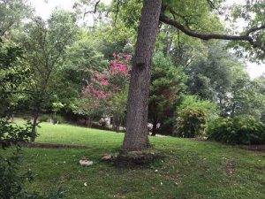 Peebles Tree Sanctuary