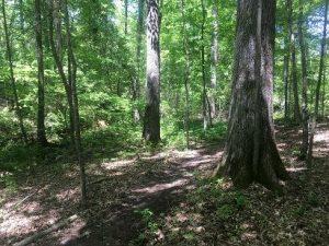 Pleasant Run Creek Park Arboretum