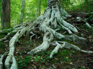 Belle Forest Arboretum