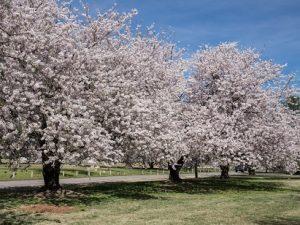 Memphis Botanic Garden Arboretum