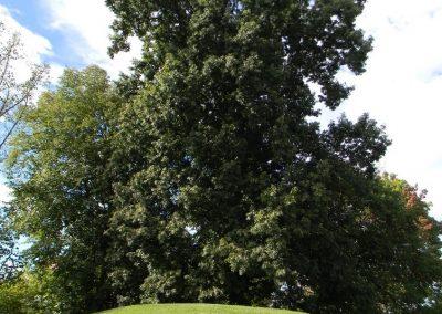Morgan Tree of UT