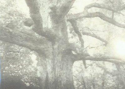Treaty Oak of Jonesborough