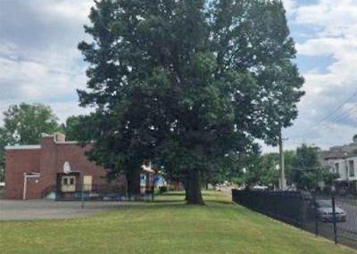 William Edmondson Homesite Trees #35