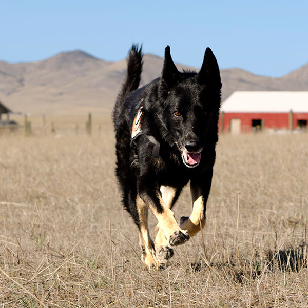 eabdog