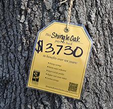 tree_tag